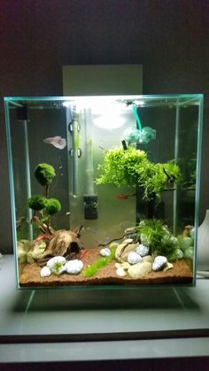 45 Stunning Aquarium Design Ideas for Indoor Decorations - Page 12 of 45 - SooPush Nano Aquarium, Nature Aquarium, Aquarium Fish Tank, Planted Aquarium, Diy Aquarium, Aquarium Design, Aquarium Setup, Aquascaping, Betta Fish Tank