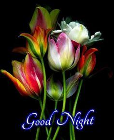 Good Night For Him, Lovely Good Night, Good Night Flowers, Good Night Sleep Tight, Good Night Prayer, Good Night Blessings, Good Night Sweet Dreams, Good Morning Good Night, Cute Good Night Messages