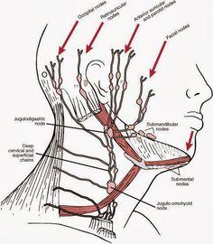 ホメオパシー、鍼灸のacutonicsやセルフケアの体験話