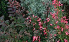 Softness in the garden can come in many forms: small leaves, like 'Purple Emperor' sedum ( Sedum 'Purple Emperor', Zones 3–7, far left); needled foliage, like 'Sea Foam' artemisia ( Artemisia versicolor 'Sea Foam', Zones 4–10, center); and airy blossoms, like 'Elfin Pink' beardlip penstemon ( Penstemon barbatus 'Elfin Pink', Zones 4–9, near left).