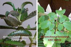 22 zasady, które zmienią twoje życie na lepsze | Na zdrowie Tobie Plant Leaves, Aloe Vera, Plants, Health And Wellness, Kuchen, Plant, Planets