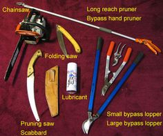 717px Pruning Tools M D Vaden Top 5 Tree Care Tips for Winter