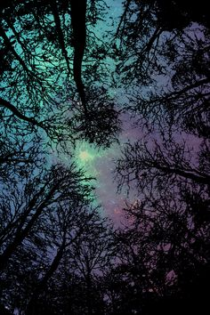 Druids Trees:  Dark #woods.