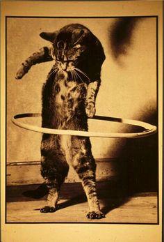 Hula hoop cat