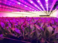 This could be part of the future of farming.