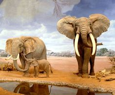 elephants in the savanna - Google Search