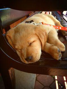 Sleepy puppy...*
