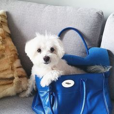 #puppy #bag #dog #mulberry #mulberrybayswater #bayswater #blue #silver