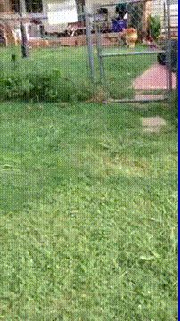 Dog Fence Crash.gif