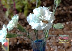 Simple Science: Color Changing Carnations - Happiness is Homemade