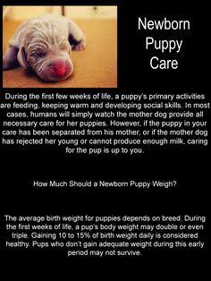 Newborn Puppy Care More