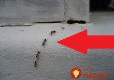 Lezú vám mravce na nervy? Overené tipy od čitateľov, ako sa ich zbaviť rýchlo, účinne a bez chémie!