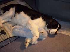 Yes, Sunny really does sleep with a teddy bear every night :)