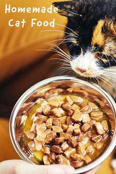 Healthy Cat Food, Homemade Cat Food, Dog Food Reviews, Kitten Food, Dog Bakery, Dog Food Brands, Good Foods To Eat, Puppy Food, Cat Site