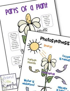 Parts of a plant and photosynthesis anchor charts freebie | Around the Kampfire