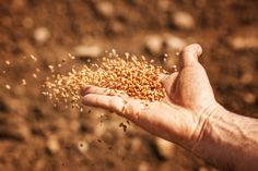 """New Testament Lesson 11: """"He Spake Many Things Unto Them in Parables"""" from LDSLiving"""