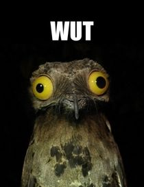 seeing-all-these-pictures-of-the-potoo-bird-on-here-i-decided-to-google-it-i-laughed-a-little-m-have-42852.jpg (210×273)