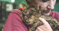 Cat who couldn't open his eyes knew he was in the right hands. Suffering from mange and an eye infection this neglected cat is now receiving veterinary care and will soon be looking for his forever home.  He has been named Valentino.