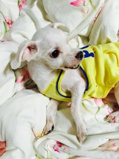 BTS has 8 little furry friends. Busan, Bts Dogs, Bts Scenarios, Cute Friends, Dog Names, Animal Rescue Shelters, Bts Bangtan Boy, Namjoon, Rapmon