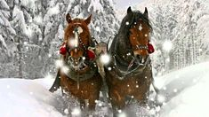 For some, Christmas and snow is a brisk ride in a sleigh behind a steaming horse. For others it's a sleigh on wheels. The ride never loses its romance. Winter Szenen, Winter Horse, Winter Time, Celine Dion, Beautiful Horses, Animals Beautiful, Horses In Snow, Cross Stitch Horse, Clydesdale Horses