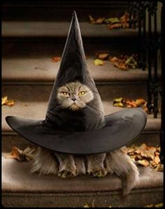 Magick Wicca Witch Witchcraft: #Cat in the #Hat.