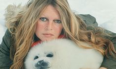 Brigitte Bardot, the former screen siren, threatens to quit France for Russia, in protest not at tax hikes but at treatment of two circus elephants. Read more