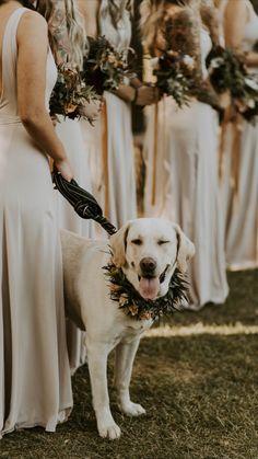 Dog Wedding, Wedding Goals, Wedding Pictures, Fall Wedding, Wedding Ceremony, Dream Wedding, Wedding Designs, Wedding Styles, Photos With Dog