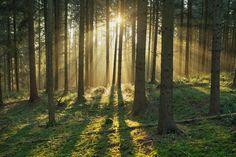 Morning Light in the Forst by Matthias Wassermann on 500px