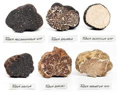 about Truffles and their Varieties Used in Cooking New find ~ place to get truffles from. So much to learn, & so much to experiment withNew find ~ place to get truffles from. So much to learn, & so much to experiment with Garden Mushrooms, Edible Mushrooms, Growing Mushrooms, Wild Mushrooms, Stuffed Mushrooms, Truffle Mushroom, Truffle Oil, Black Truffle, Edible Plants