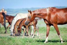 Vårens bästa böcker om hästar