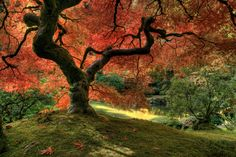 Eazywallz  - Japanese maple tree Wall Mural, �86.73 (http://www.eazywallz.com/japanese-maple-tree-wall-mural/)