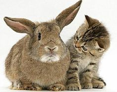 I love the way the cat's looking at the bunny!