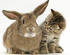 """CATperucita: """"Abuelita, qué orejas tan grandes¡¡¡"""" v ll coffeeoath.com"""