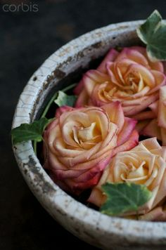 Roses in Stone bowl