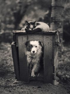 Precious Pets ❤