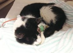Zombie Cat Should Not Go Back To Owner Who Buried Him Alive: Humane Society