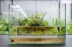 Wabi-Kusa, aquarium, aqua design amano (ADA)