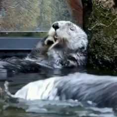 Gotta wash, wash it all. 😍- Gotta wash, wash it all. Cute Funny Animals, Cute Baby Animals, Animals And Pets, Cute Cats, Animal Antics, Animal Memes, Cute Animal Videos, Cute Creatures, Cool Pets