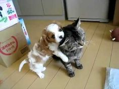 The cat got a new puppy today Awwww