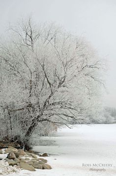 Another from the Frosty Morning Series at Wascana Lake, Regina, SK
