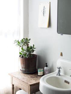 succulent, big pot, simple table, white.