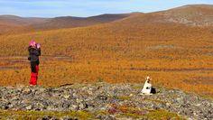 Photo by NorthernLightsInari  wilderness area. Endless Night, I Want To Travel, Beagle, Trekking, Arctic, Finland, Wilderness, Northern Lights, Landscape