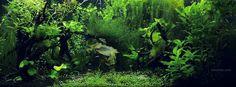 The Tetra Forest aquarium Facebook cover photo.