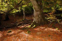 """Selva de Irati, un santuario de la naturaleza - Tener a tiro de piedra uno de los mayores hayedo-abetales de Europa y la segunda extensión boscosa más grande de todo Europa (superada sólo por la Selva Negra de Alemania) no tiene precio, y no sacar un hueco en nuestras apretadas agendas para ir a verlo un fin de semana, es un delito. La llaman """"El bosque de los bosques"""", ¿quieres saber por qué?  - http://www.wanderonworld.com/selva-de-irati-un-santuario-de-la-naturaleza/"""