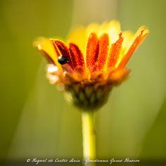 Spring Blooms, Daisy, Seeds, Link, Floral, Margarita Flower, Flowers, Daisies, Flower