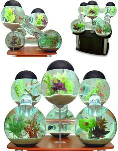 cool custom fish tanks..bet they'd be hard to clean.