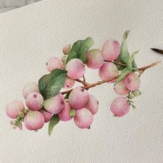 Illustrations Sharing Page ( Watercolor Fruit, Watercolor Landscape, Watercolor And Ink, Watercolor Illustration, Watercolour Painting, Watercolor Flowers, Watercolors, Watercolor Pictures, Watercolor Projects