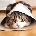 Maru is my favorite kitty on the Internet.  He lives in Japan and has his own blog and videos.  If I'm ever blue, I watch me some Maru and I feel a lot better.