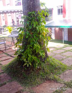 UPIS_FOTO_042016_ATIVIDADE05_ORNAMENTAÇÃO