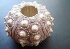 """2 Large Purple Sputnik Sea Urchins (2-3""""). $4.50, via Etsy."""